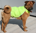 100 Honden veiligheidsvesten